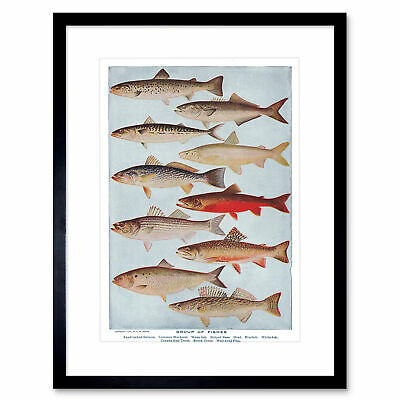 Science Fish Salmon Mackerel Trout Pike Framed Art Print Picture Mount 12x16""
