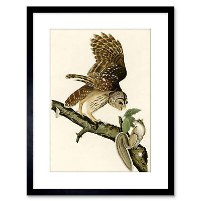 Painting Book Page Birds America Audubon Barred Owl Framed Print 9x7 Inch