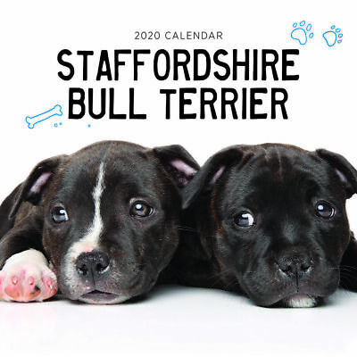 2020 Staffordshire Bull Terrier Staffy Dogs Wall Calendar 30 x 30cm Paper Pocket