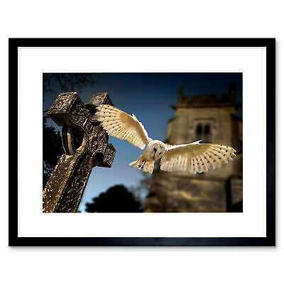 Photo Barn Owl Bird Alba Graveyard Scotland Framed Print 12x16 Inch