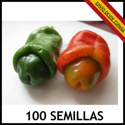 100x PIMIENTO EROTICO SEMILLAS SEEDS PETER CHILI PEPPERS