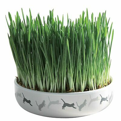 Trixie 15cm Ceramic Bowl with Cat Grass, 50g Seeds, Grow Your Own Aids Digestion