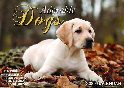 2020 Adorable Dogs Big Print Wall Calendar by Bartel BP009 FREE POST
