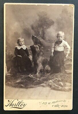 Antique Hartley Studio Children With There Dog Cabinet Card Photo, Chicago, IL.