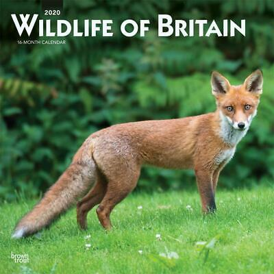 Wildlife of Britain 2020 - 16 Month Square Wall Calendar