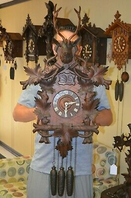 Antique German Black Forest Quail Cuckoo Clock With Large Stag Head