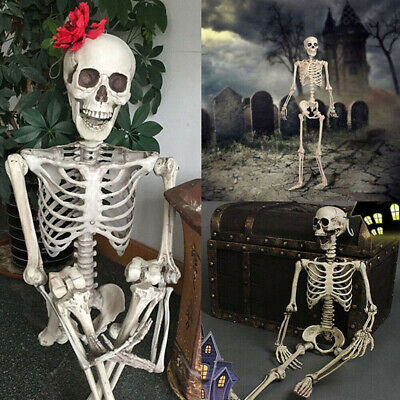 Halloween Poseable Life Size Skeleton Party Prop Decor Human Anatomy Model