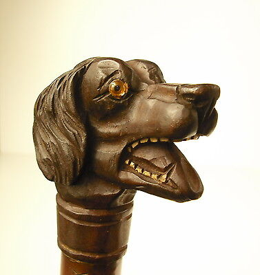 Cane Antique Pommel Tête de Dog Bamboo Cane with Carved Wood Dog Pommel