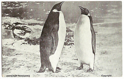 'Emperor Penguins' original postcard from Shackleton's Antarctic expedition