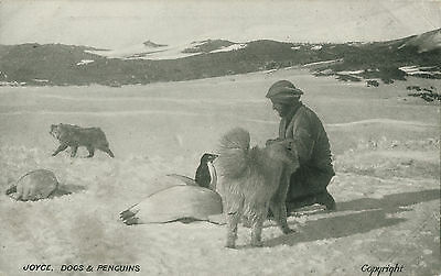 [Shackleton's British Antarctic Expedition, 1907-9.] 'Joyce, Dogs & Penguins.'