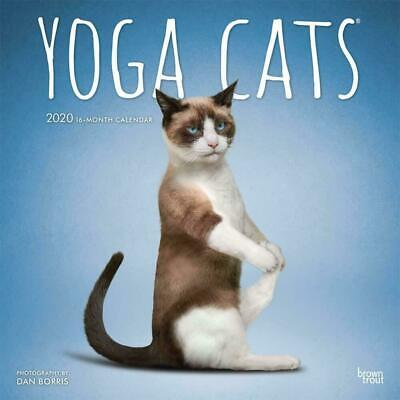 Yoga Cats 2020 Square FOIL Wall Calendar by Browntrout an Ideal Gift FREE POST