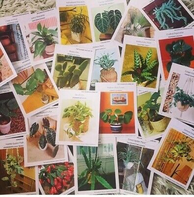 Vintage Womans Day Greenhouse Card Set 70s