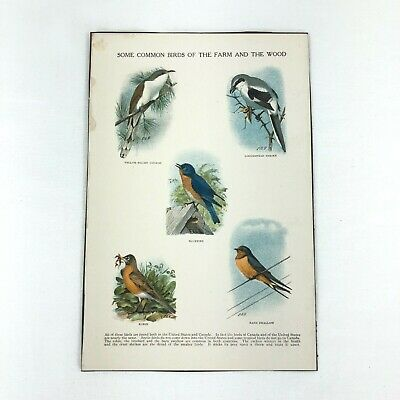 VTG 1936 Art Print Bird Eggs Illustration Litho LA Fuertes ** SEE VARIETY