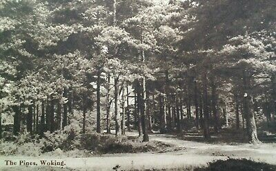 Woking UK Antique Postcard Early 1900s Rare The Pines Surrey London Posted
