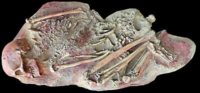 Direct resin copy of female shaman skeleton from Vestonice, 27 000 years old