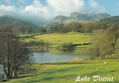 Loghrigg Tarn and the Langdale Pikes Lake District Postcard used VGC
