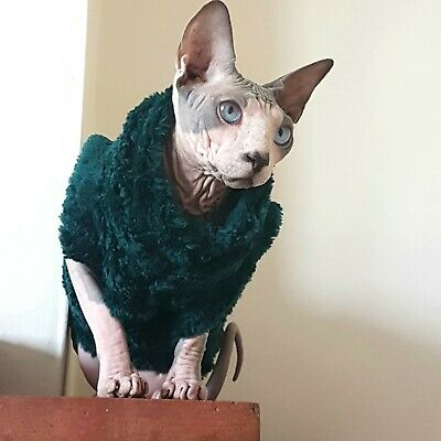 FLUFFY adult XL, Sphynx cat clothes, hotsphynx, hairless cat clothes, cat top
