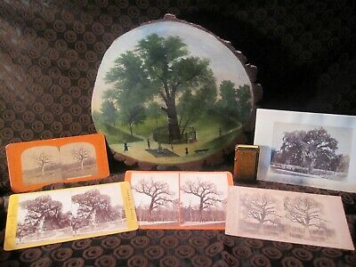 Extremely Rare and Historical Boston, Mass.  Elm Tree Artifacts