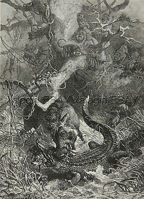 Crocodile Vs. Warthog with Black-and-White Colobus, Large 1880s Antique Print