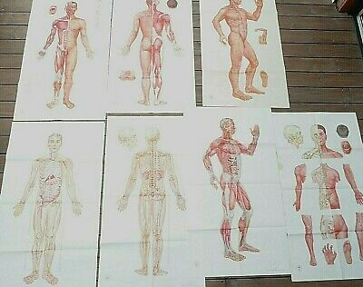 Lot anciennes affiches (7) acupuncture/anatomie chinoise.