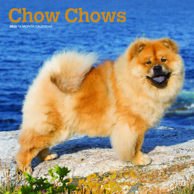 Chow Chows 2020 Square Wall Calendar by Browntrout 30 x 30cm Free Post