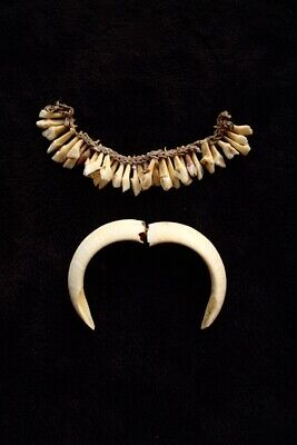 Old Tooth Necklace and Boars Pendant - Papua New Guinea