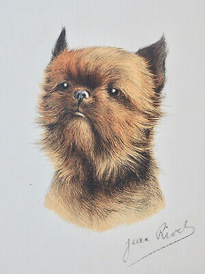 Handsome Color Print of Brussels Griffon by Jean Rivel Dog Art