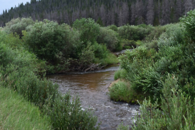 "🚩💰✅🔷20 Acre Gold Mining Claim (Placer) "" Colorado, Jackson County ✅🔷💰🚩"