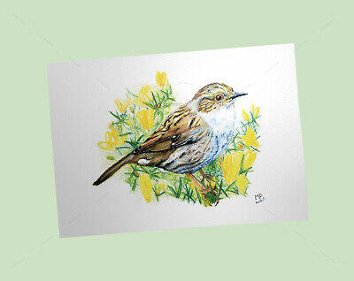 Dunnock Art Print, British Garden Birds, of watercolour pencil drawing