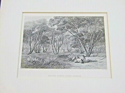 RARE  ABORIGINAL MALLEE SCRUB RIVER MURRAY  ENGRAVING BY N.Chavalier & W.Forest