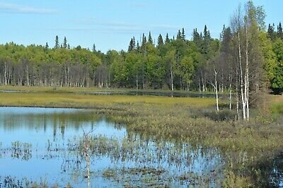 Only $199 Down - 17+ Acres With Pond & Mountain Views Near Homer - No Qualifying