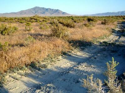 $199 Down! 45 Acre Ranch-Staked & Surveyed  - No Qualifying -1000' Road Front