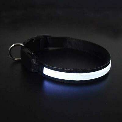 The Dogs DangLeads. Rechargeable LED Dog Collars with Bright Visible LED...