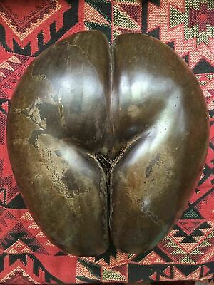 Large Antique COCO-DE-MER Seed 1900's #1