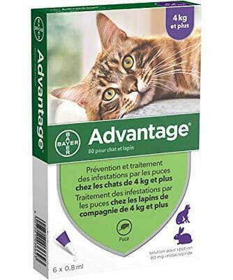 Bayer Advantage 80 Chat/Lapin 4-10 kg 6 pipettes antiparasitaires 2125 Divers