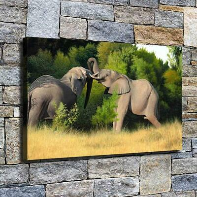 "12""x20"" Elephant's Pleasure HD Canvas prints Home decor Room Wall art Pictures"