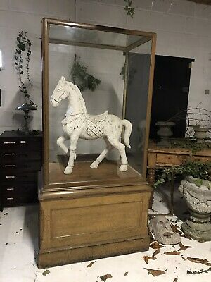 Antique Early 20th Century Oak Museum Display Cabinet
