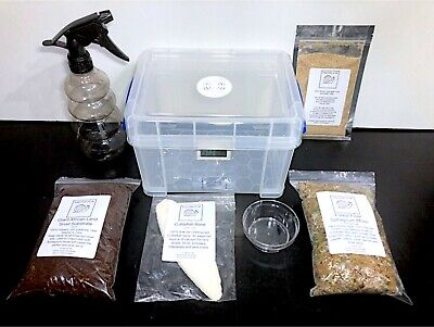 3L Basic Snail Starter kit, All contents included