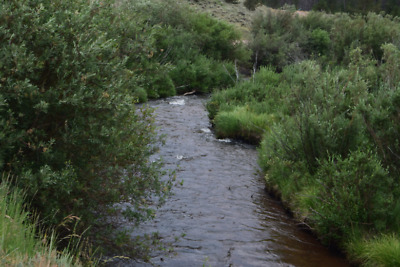"💰20 Acre Gold Mining Claim ✅Placer✅ ""Sheep Creek"" Colorado, Larimer County💰"
