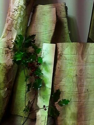 American holly white wood exotic hardwood craft wood carving rough cut slabs