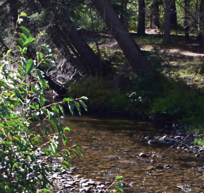 💰20 Acre Gold Mining Claim ✅Placer✅ 🔷Park Creek🔷 Rio Grande County Colorado💰