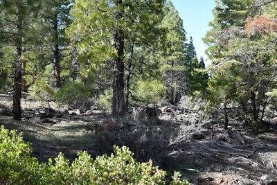 Wholesale 5 Lots in Modoc County - California Pines, Unit 5 - NO RESERVE