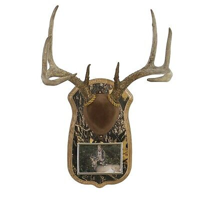 All Game Epoxy Sculpting Putty Taxidermy Antler Art Crafts Deer Fish 1.5 lb