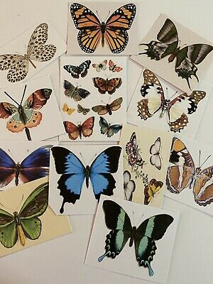Vintage Style CARDS-Butterflies~DIE CUTS//Gift Tags 48 Piece~Nature