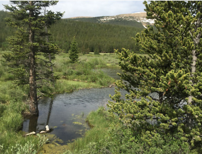✅20 Acre ✅🚩Park County Colorado 🚩Gold Mining Claim Placer 💰