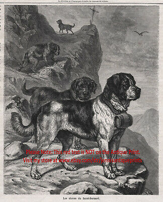 Dog Saint Bernard Rescue Dogs Working St, 1870s Antique Engraving Print
