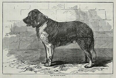 Dog St. Saint Bernard Guard Dog, Large 1870s French Antique Print