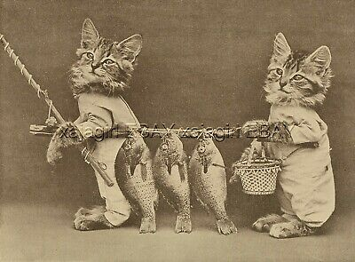 Cat Dressed Kitten Fishermen With Fishing Catch of the Day, Cute 1915 Print