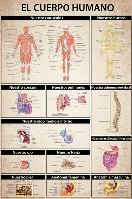 The Human Body - El Cuerpo Humano Anatomy Poster Print (36x24in) #99589