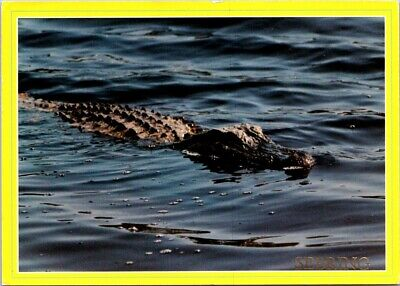 Vintage Postcard Don't Mind The Florida Gator The Water's Fine Posted 1988